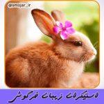 دانلود استیکر خرگوش واقعی